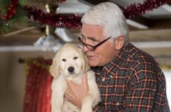 фильмы про рождество и собак